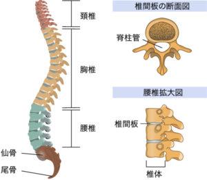 3,背骨を緩める